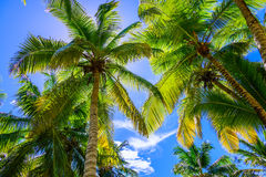 Palm sun top Royalty Free Stock Photography