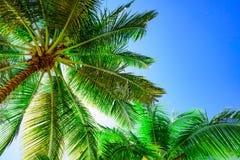 Palm sun top Royalty Free Stock Photos