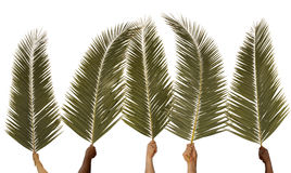 Palm Sunday Stock Photography