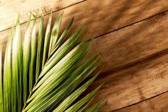 Palm Sunday concept stock photos