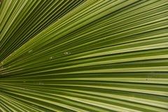 Palm Sunday Leaf Royalty Free Stock Image