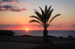 Palm on sundown Royalty Free Stock Image