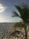 palm royaltyfri bild