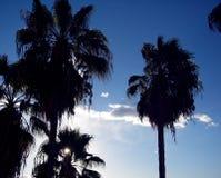 Palm Sunrise. Sunrise silhouetting plam trees Royalty Free Stock Image