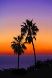 Palm at sunset. At the beach Royalty Free Stock Photos