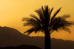 Palm Sunset Royalty Free Stock Images