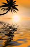 Palm sunset Royalty Free Stock Image