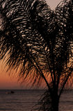Palm in the sunset Royalty Free Stock Photos