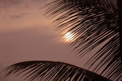Palm Sunset Royalty Free Stock Photo