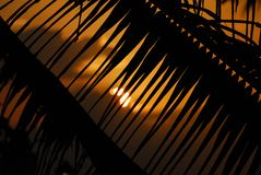 Palm / sunset background Royalty Free Stock Photo
