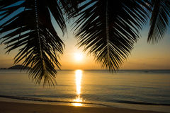 Palm and Sunset beach Stock Photography