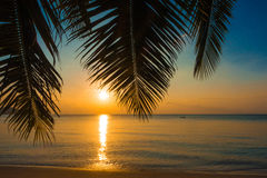 Palm and Sunset beach Royalty Free Stock Image