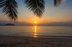 Palm and Sunset beach Royalty Free Stock Photo