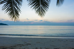 Palm and Sunset beach Royalty Free Stock Images
