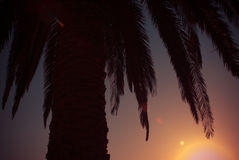 Palm and sunset creative view Royalty Free Stock Images