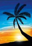 Palm on the sunset Stock Photos