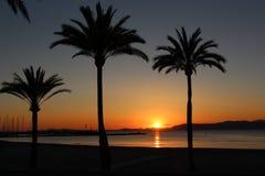 palm sunset drzewo Fotografia Royalty Free