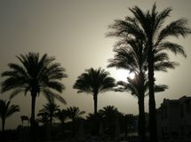 Palm in the sunset royalty free stock photography