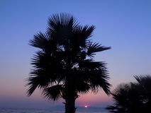 Palm at the sunset near the sea Stock Images