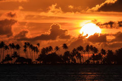 Palm Sunset Puerto Rico Stock Images