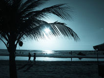 palm sunset tree Στοκ φωτογραφία με δικαίωμα ελεύθερης χρήσης
