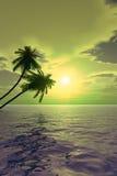 Palm_Sunset2_V Stock Photography