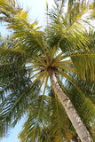 Palm on sunshine Royalty Free Stock Photos