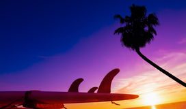 Palm and surfboard by the shore at sunset Stock Photo