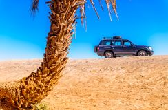 Palm and SUV in the desert of Morocco next to M`hamid. View on palm and SUV in the desert of Morocco next to M`hamid stock image