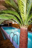 Palm by swimming pool Royalty Free Stock Images