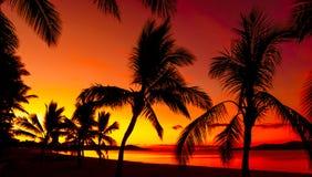 Palm sylwetki na tropikalnej plaży Obrazy Stock