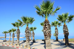 Palm tees and promenade Royalty Free Stock Photography