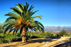 Palm tegen bergen Stock Afbeeldingen