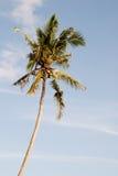 Palm tegen blauwe hemel Royalty-vrije Stock Fotografie