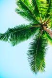 Palm tegen blauwe hemelachtergrond royalty-vrije stock afbeeldingen
