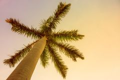 Palm tegen de avondhemel, gestemde bodemmening, Royalty-vrije Stock Fotografie