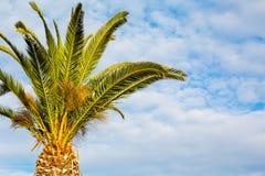 Palm tegen de bewolkte blauwe hemelachtergrond Royalty-vrije Stock Foto's