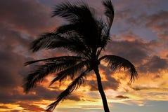 Palm tegen de Hemel van de Zonsondergang Stock Foto