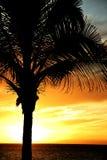 Palm tegen dramatische hemel Royalty-vrije Stock Fotografie