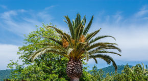 Palm tegen een blauwe hemel Royalty-vrije Stock Foto's