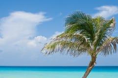 Palm tegen tropische oceaan Royalty-vrije Stock Foto's