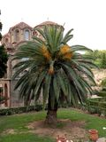 Palm in Thessaloniki Royalty Free Stock Photos