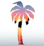 Palm Three Silhouette. With beautiful sunset Royalty Free Stock Photos
