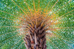 Palm top close-up, bottom-up Stock Photography