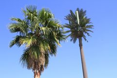 USA, Arizona/Phoenix Area: Palm and Transmission Palm Stock Images
