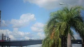 Palm with transport bridge on background stock footage