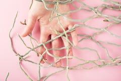 Palm trasslade till rotar in, anslutningsmannen & naturbegreppet Royaltyfri Bild