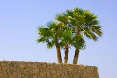 Palm tree. On stone wall Stock Photos