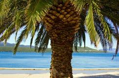 Palm Tree. Big Palm Tree on the beach Stock Photo