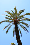 Palm tree. On the sky background Royalty Free Stock Photos